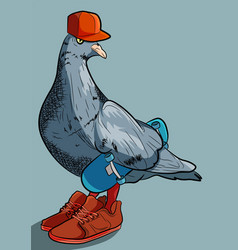 Cool gangsta pigeon with sneakers vector