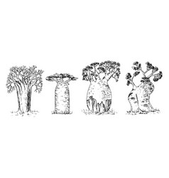 different types african baobab set vector image