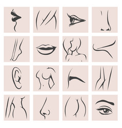 Female body parts set vector