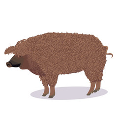 Mangalica pig cartoon vector