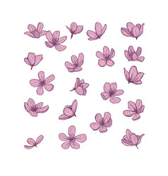Pink blossom flowers isolated on white background vector