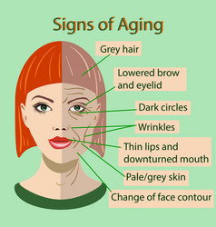 Sing of aging face with two types of skin vector