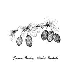 Berry fruit hand drawn sketch of fresh japanese vector