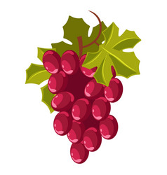 Grape bunch isolated berry winemaking plantation vector