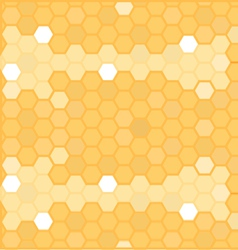 honey in honeycomb vector image