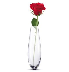 Rose in a vase vector