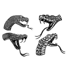 Set heads poisonous snake in engraving vector