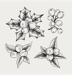 vintage set hand drawn mistletoe vector image