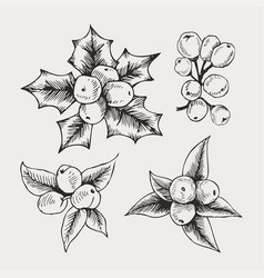 vintage set of hand drawn mistletoe vector image