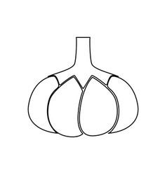 garlic black color path icon vector image