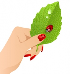 Vector female's hand with leaf. vector image vector image