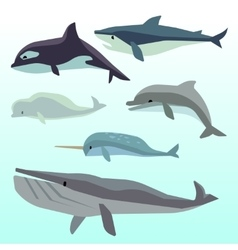 Whales and dolphins marine underwater mammal vector image vector image