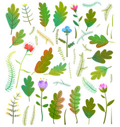leaves foliage flowers forest collection vector image