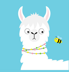 llama alpaca face looking at bee childish baby vector image