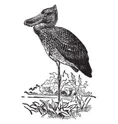 Shoe billed stork vintage vector