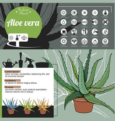 Template for indoor plant aloe vera tipical vector