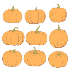 Ginger pumpkins on a white background vector
