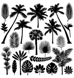 Palm and tropical plant silhouette set vector