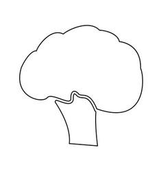 broccoli black color path icon vector image vector image