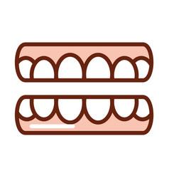 human body teeth mouth anatomy organ health line vector image