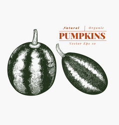 pumpkin set hand drawn vegetable engraved style vector image