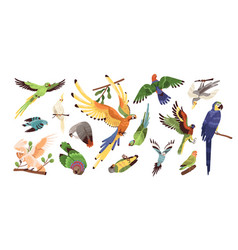 set different tropical parrots vector image