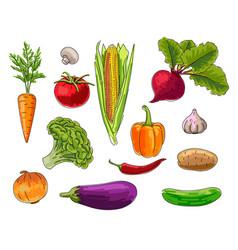 Set vegetebles handrawn bright colour vector