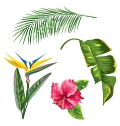 Tropical leaves and flowers set Palms branches vector image