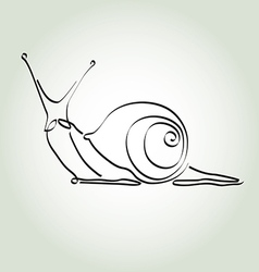 Snail in minimal line style vector image