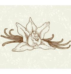 Vaniila flowers vector image
