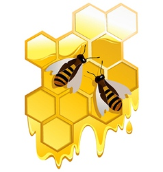 Honey and bees vector