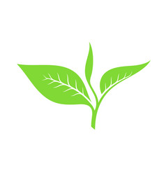 tea leaf vector image