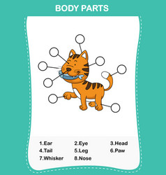 cat vocabulary part of body vector image