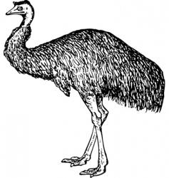 emu dromiceiidae vector image