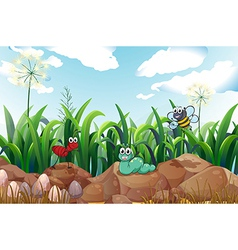 Insects above rocks vector