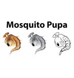 mosquito pupa in three different drawing styles vector image