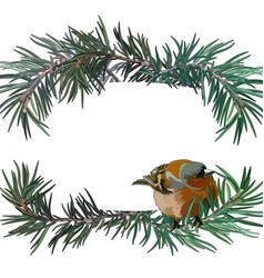 postcard with bullfinch on the fir tree vector image