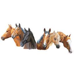 Set of horses breeds2 vector