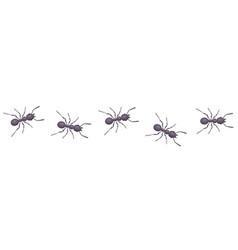 Black ants go in line parasites take over vector