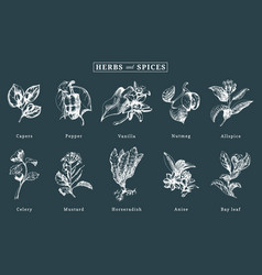 Drawn spices and herbs set botanical vector