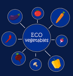 eco vegetables healthy food infographic vector image