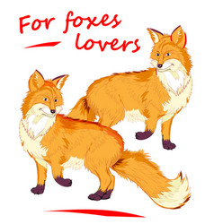 Fantasy two cute red foxes on white background vector