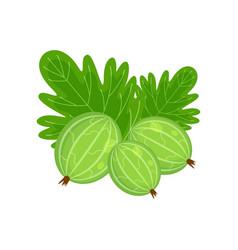 Green gooseberry isolated o vector