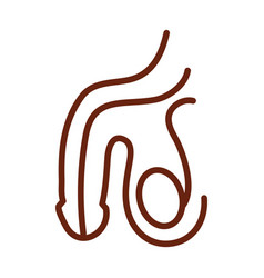 human body male reproductive system anatomy organ vector image