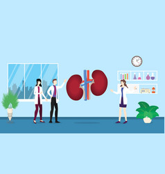 human kidneys anatomy structure health care vector image