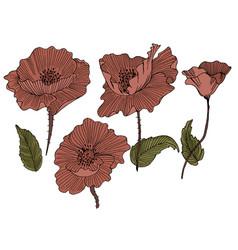 Poppy on white background vector