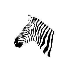 black and white zebra portrait with side view vector image vector image