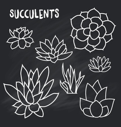 Graphic Set of succulents isolated on chalk board vector image vector image