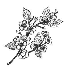 Cherry blossom engraving vector