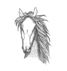 Muscular thoroughbred horse sketch symbol vector